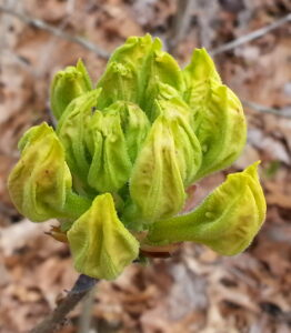 yellow not open yet 4-19-16