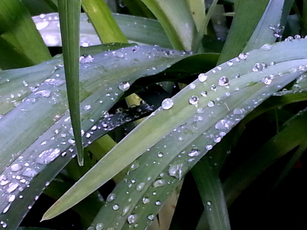 Water drops on green 1