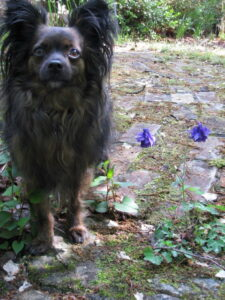 Jackson and Blue Flowers May 2011