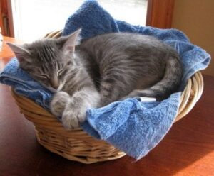 bella-in-a-basket-5