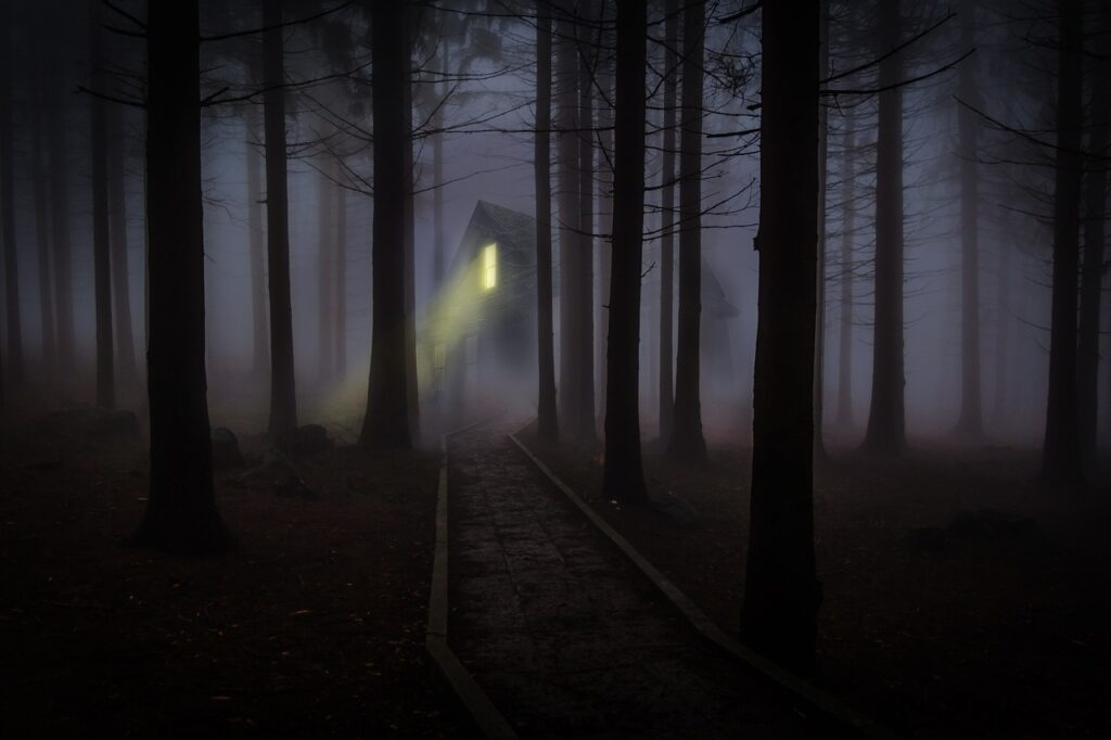 forest foggy one light
